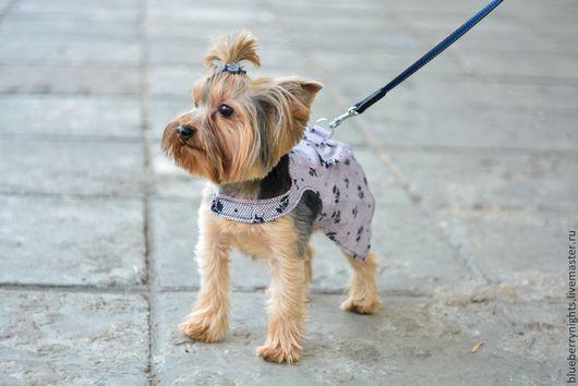 """Одежда для собак, ручной работы. Ярмарка Мастеров - ручная работа. Купить Платье для маленькой собачки """" Вуаль """". Handmade."""