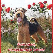 Картины и панно ручной работы. Ярмарка Мастеров - ручная работа Фото вашей собаки на пластиковой табличке.. Handmade.