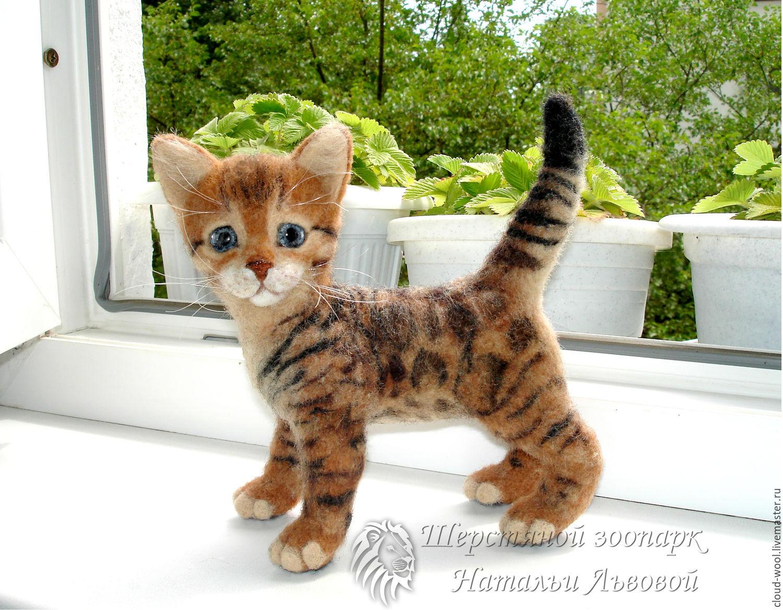 Бенгальская кот авито