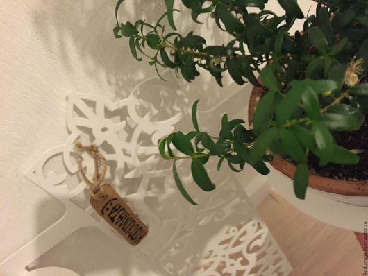 Подставки под цветы ручной работы. Ярмарка Мастеров - ручная работа. Купить Настенный держатель для цветов (2 кашпо). Handmade.