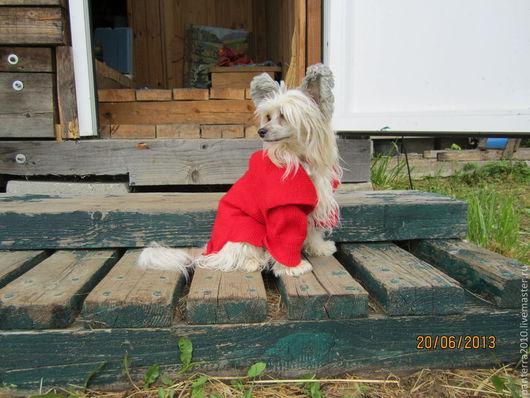 Одежда для собак, ручной работы. Ярмарка Мастеров - ручная работа. Купить Свитер для собаки. Handmade. Одежда для собак