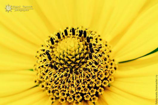 Фотокартины ручной работы. Ярмарка Мастеров - ручная работа. Купить Солнечный цвет Императора. Handmade. Желтый, желтый цвет, уверенность