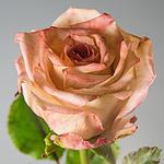Bella Rosa Decor - Ярмарка Мастеров - ручная работа, handmade