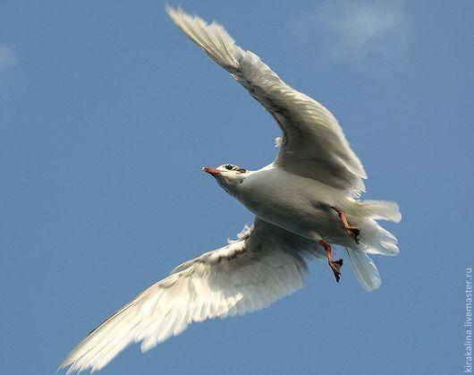 Фотокартины ручной работы. Ярмарка Мастеров - ручная работа. Купить Крылья Фотокартина. Handmade. Голубой, небо, крылья, фотобумага, фоторамка