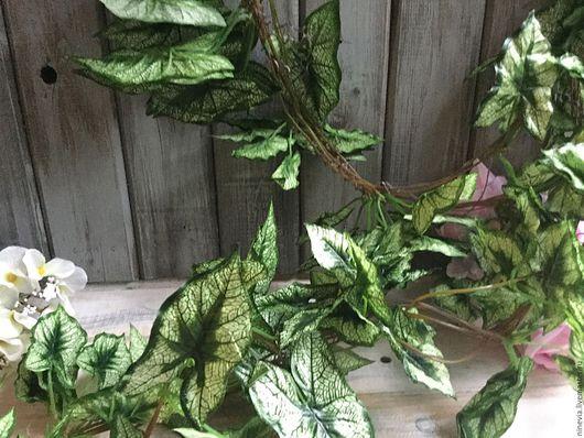 Материалы для флористики ручной работы. Ярмарка Мастеров - ручная работа. Купить Сингониум- лиана с листьями. Handmade. Лиана с листьями, лиана