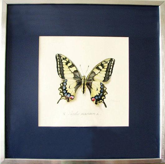 """Животные ручной работы. Ярмарка Мастеров - ручная работа. Купить Картина """"Бабочка парусник"""". Handmade. Бабочка, парусник, картина акварелью"""