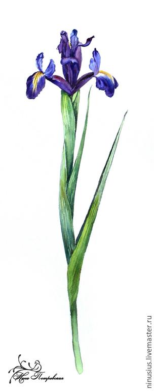 """Город ручной работы. Ярмарка Мастеров - ручная работа. Купить """"Ирисы"""" серия ботанических иллюстраций. Handmade. Ирис, весенние цветы"""