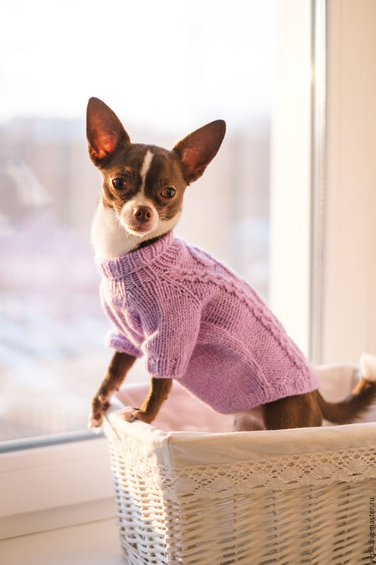 Одежда для собак, ручной работы. Ярмарка Мастеров - ручная работа. Купить свитер для собаки. Handmade. Сиреневый, свитер для кошки