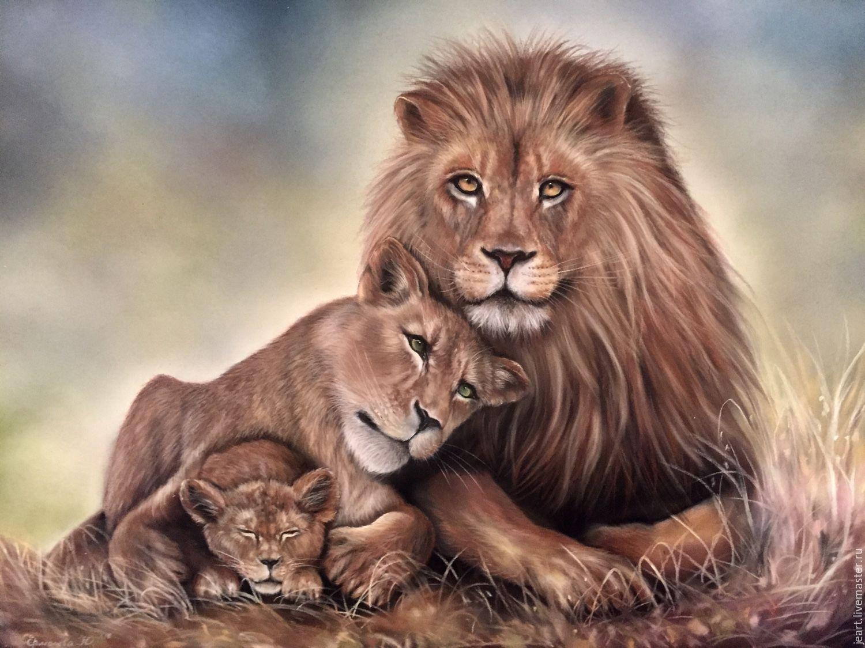 Любовь львов картинки