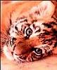 Тигрёшкина Нюська - Ярмарка Мастеров - ручная работа, handmade