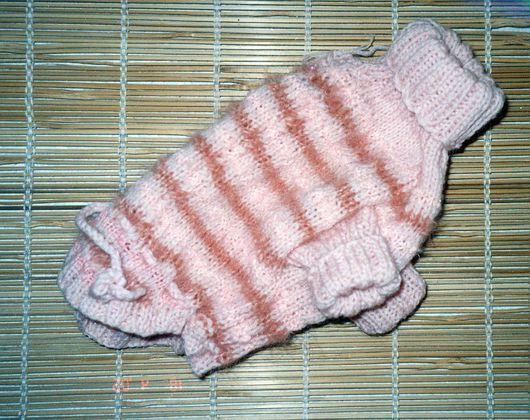 Одежда для собак: свитер для чихуа