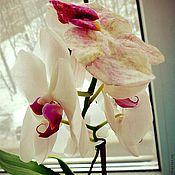 Цветы и флористика ручной работы. Ярмарка Мастеров - ручная работа Орхидея. Handmade.