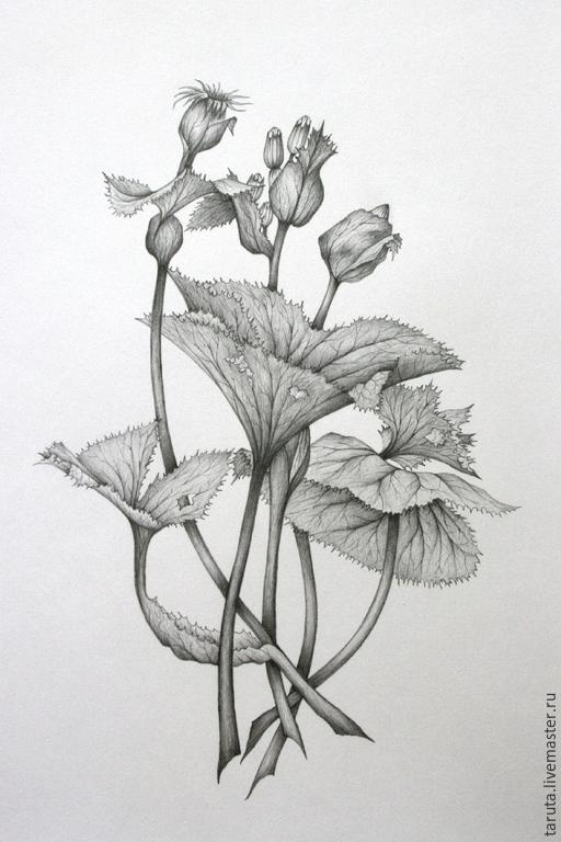 Цветы графика черно-белые