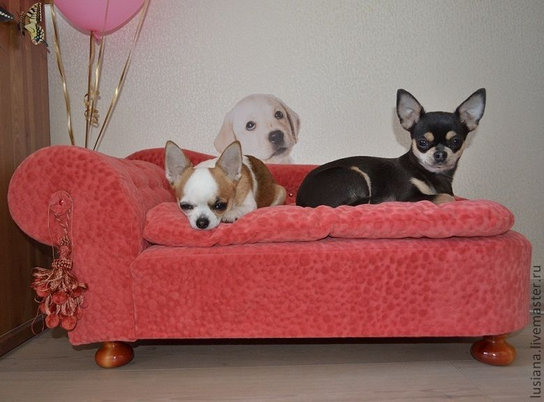 Couch for pet's Favorit, Accessories for Pets, Ekaterinburg,  Фото №1