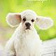Игрушки животные, ручной работы. Рокки. Anastasiya. Интернет-магазин Ярмарка Мастеров. Палевый, щенок, шерсть, пластиковые глазки