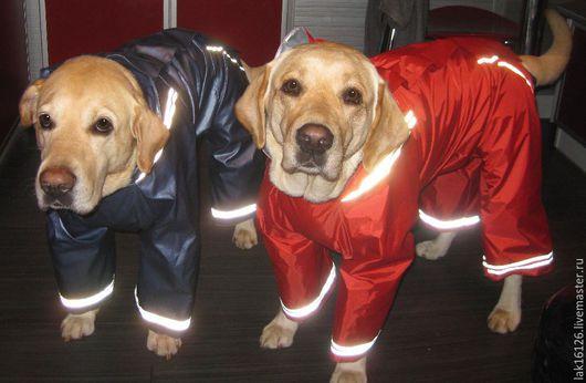 Одежда для собак, ручной работы. Ярмарка Мастеров - ручная работа. Купить Комбинезон для собаки. Handmade. Комбинезон, разноцветный, резинки