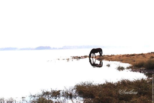 """Фотокартины ручной работы. Ярмарка Мастеров - ручная работа. Купить Фотокартина """"Конь"""". Handmade. Фотокартина, вода, Фотокартина природа, коричневый"""