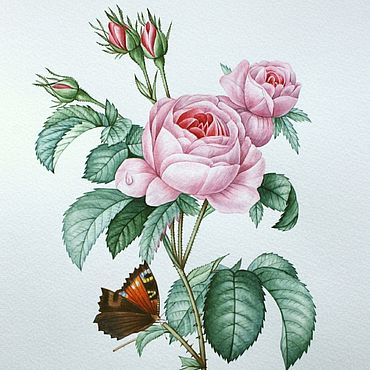 """Картины и панно ручной работы. Ярмарка Мастеров - ручная работа Рисунок """"Роза и бабочка"""" акварель. Handmade."""