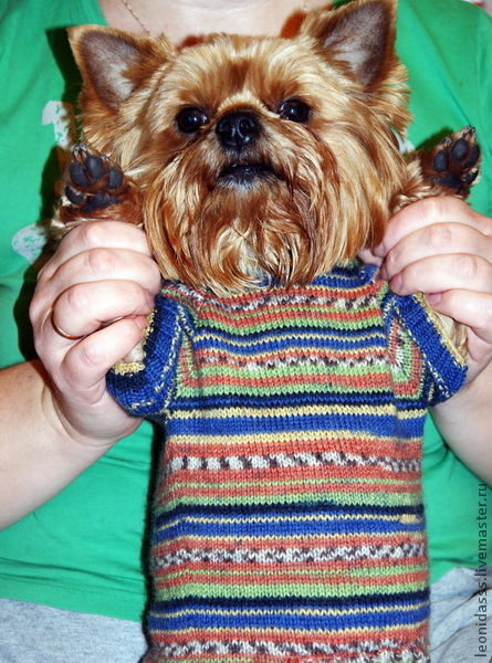 Одежда для собак, ручной работы. Ярмарка Мастеров - ручная работа. Купить свитер  для собаки. Handmade. Одежда для собак, одежда на заказ