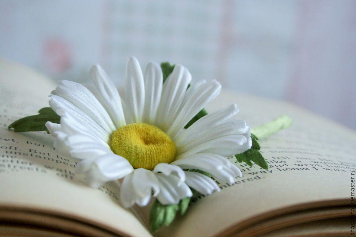Купить ромашки цветы купить розы в москве опт