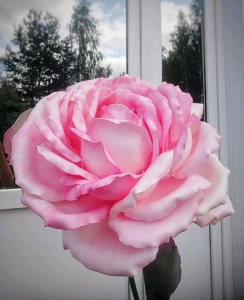 Роза светильник ночник торшер ребёнку спальня гостиная Большие цветы, Ночники, Сосновый Бор, Фото №1