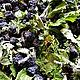 Таёжный чай с вишней и черноплодной рябиной, Наборы чая и кофе, Омск,  Фото №1
