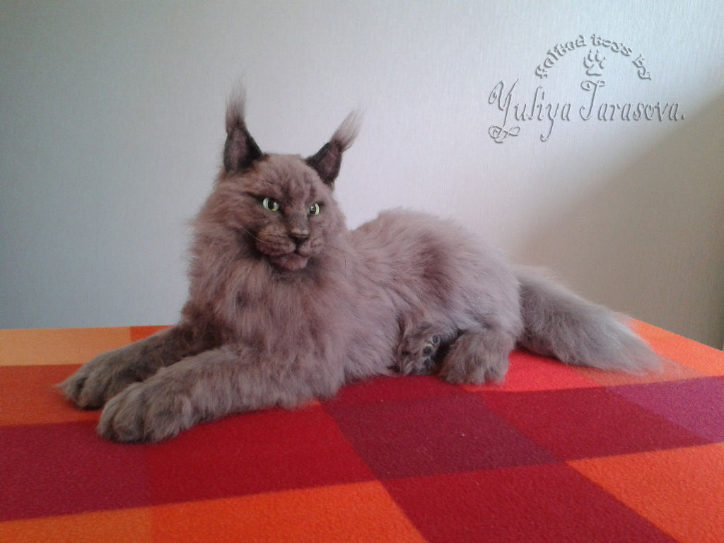 Котенок мейн кун серый