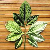 Материалы для творчества handmade. Livemaster - original item The leaves of the roses green, seruling, materials for Floristics. Handmade.
