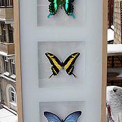 Картины и панно ручной работы. Ярмарка Мастеров - ручная работа Три бабочки в рамке. Handmade.