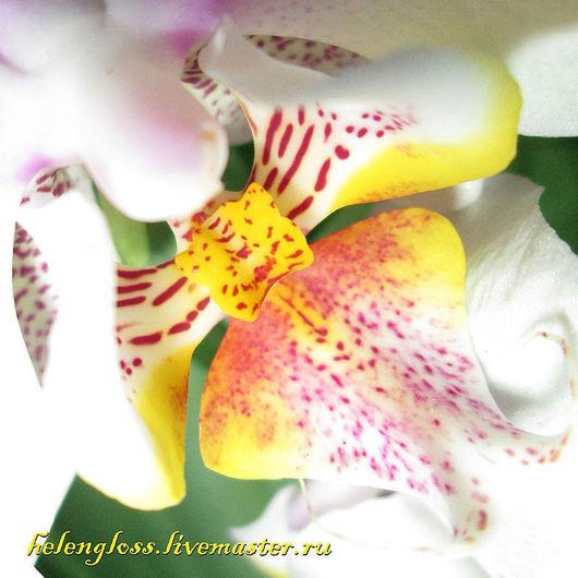 Фотокартины ручной работы. Ярмарка Мастеров - ручная работа. Купить Птица, живущая в цветке. Handmade. Желтый, белый, пятна, пестрый