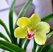 Цветы и флористика ручной работы. Ярмарка Мастеров - ручная работа Орхидея из холодного фарфора.Цимбидиум зеленый. Handmade.