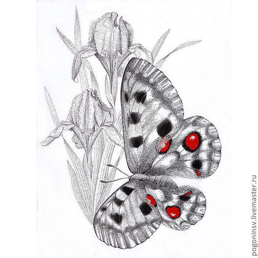 """Животные ручной работы. Ярмарка Мастеров - ручная работа. Купить Картина """"Аполлон"""". Handmade. Акварель, графика, тушь, насекомые, бабочка"""