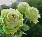 """Цветы и флористика ручной работы. Ярмарка Мастеров - ручная работа Розы """"лимбо"""". Handmade."""