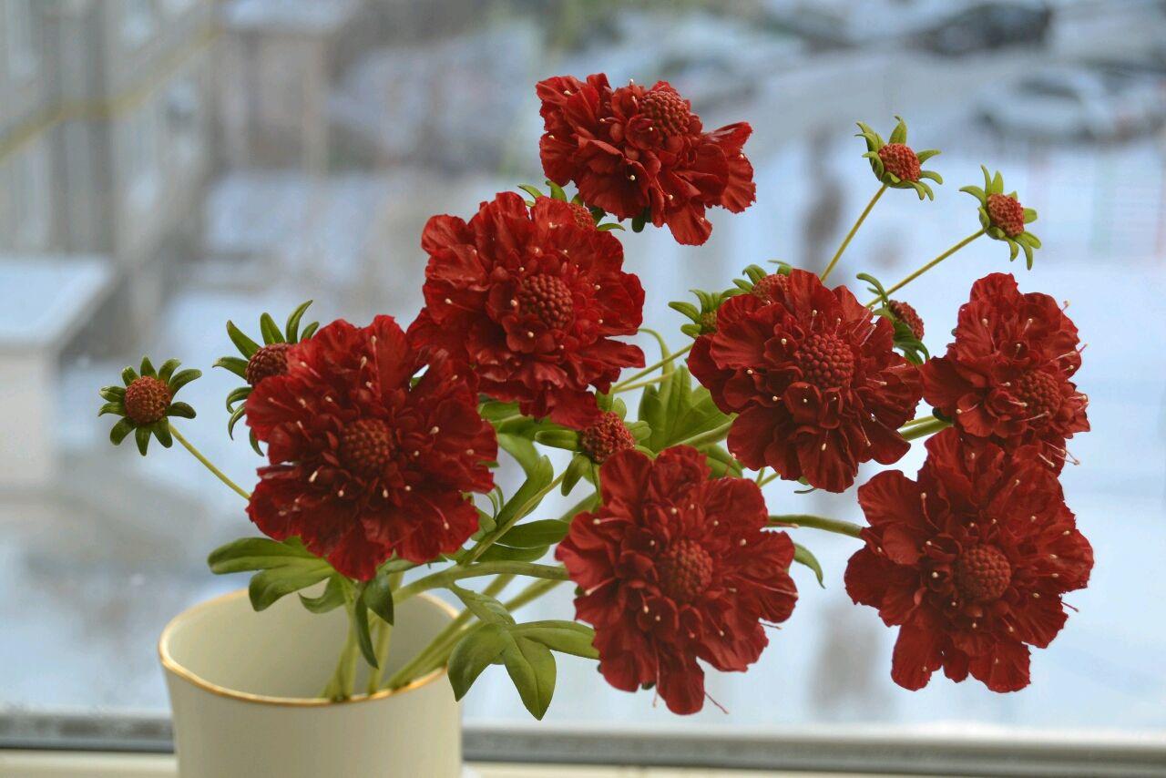 Скабиоза из холодного фарфора, Цветы, Гай,  Фото №1