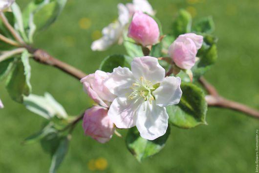 Цветы ручной работы. Ярмарка Мастеров - ручная работа. Купить Ветка яблони из полимерной глины. Handmade. Комбинированный, ручная работа