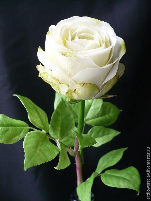 белый роза картинка
