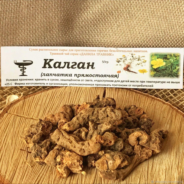 Kalgan or Lapchatka erect root, Grass, Kemerovo,  Фото №1