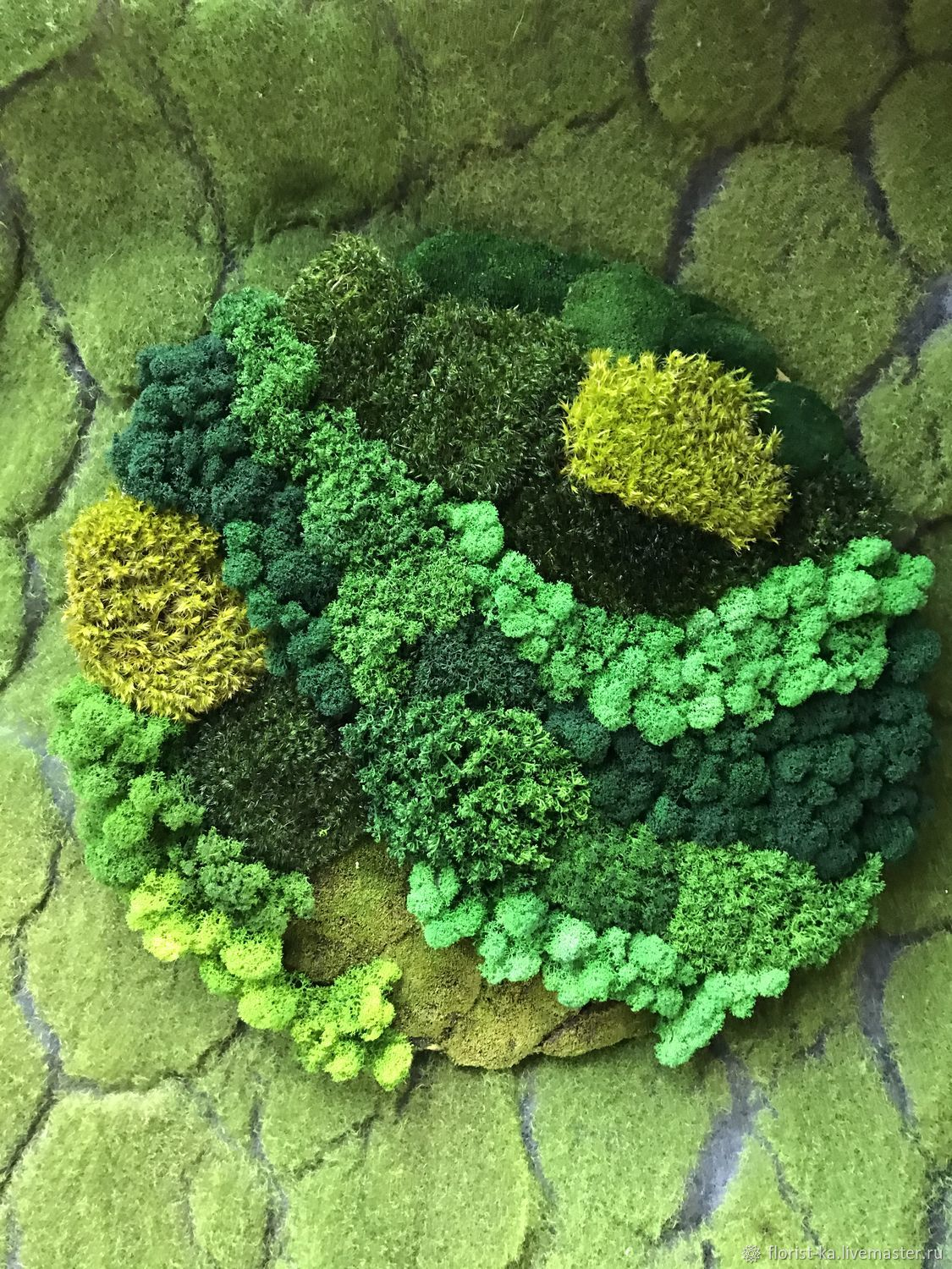 Round phytocart of different types of moss 50 cm, Fitokartins, Belgorod,  Фото №1