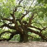 Легенды леса - Ярмарка Мастеров - ручная работа, handmade