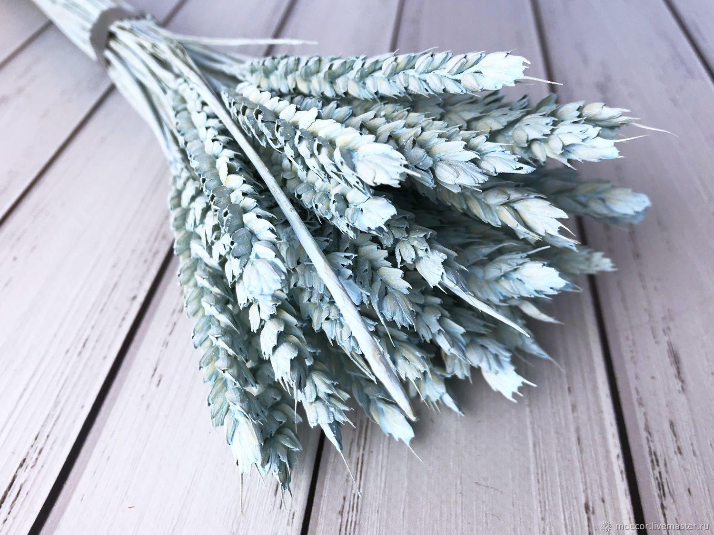 Пшеница голубая 50 см. 30 колосков, Сухоцветы, Москва,  Фото №1