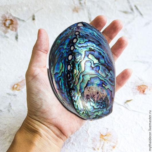 Другие виды рукоделия ручной работы. Ярмарка Мастеров - ручная работа. Купить Морские раковины Гелиотис (абалон, пауа). Handmade.