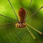 Spider OSA - Ярмарка Мастеров - ручная работа, handmade