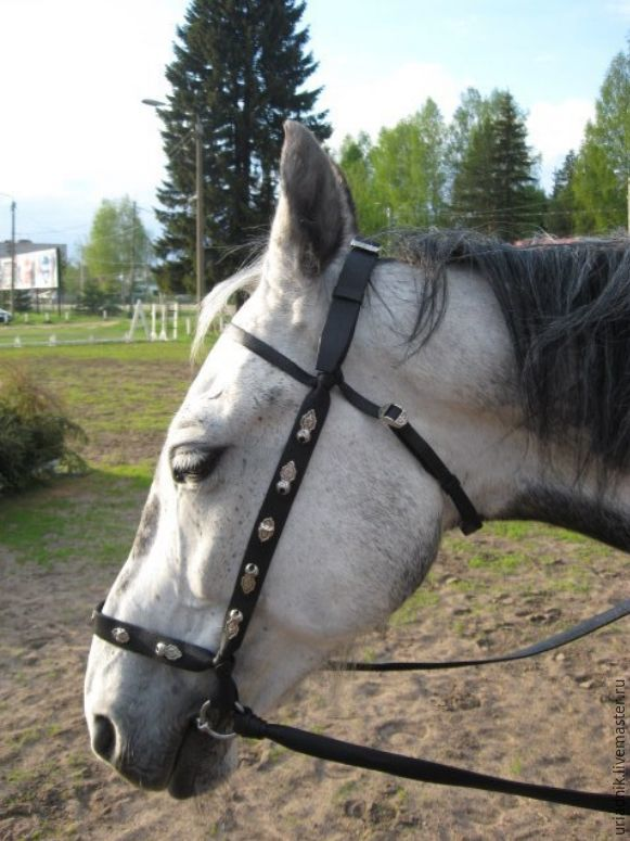 """Bridle """"Steppe"""" or """"Cossack""""with rein, Handmade, Bridles, Kirov,  Фото №1"""
