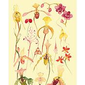 Иллюстрации ручной работы. Ярмарка Мастеров - ручная работа Ботаническая иллюстрация-плакат ОРХИДЕИ (3), А3. Handmade.
