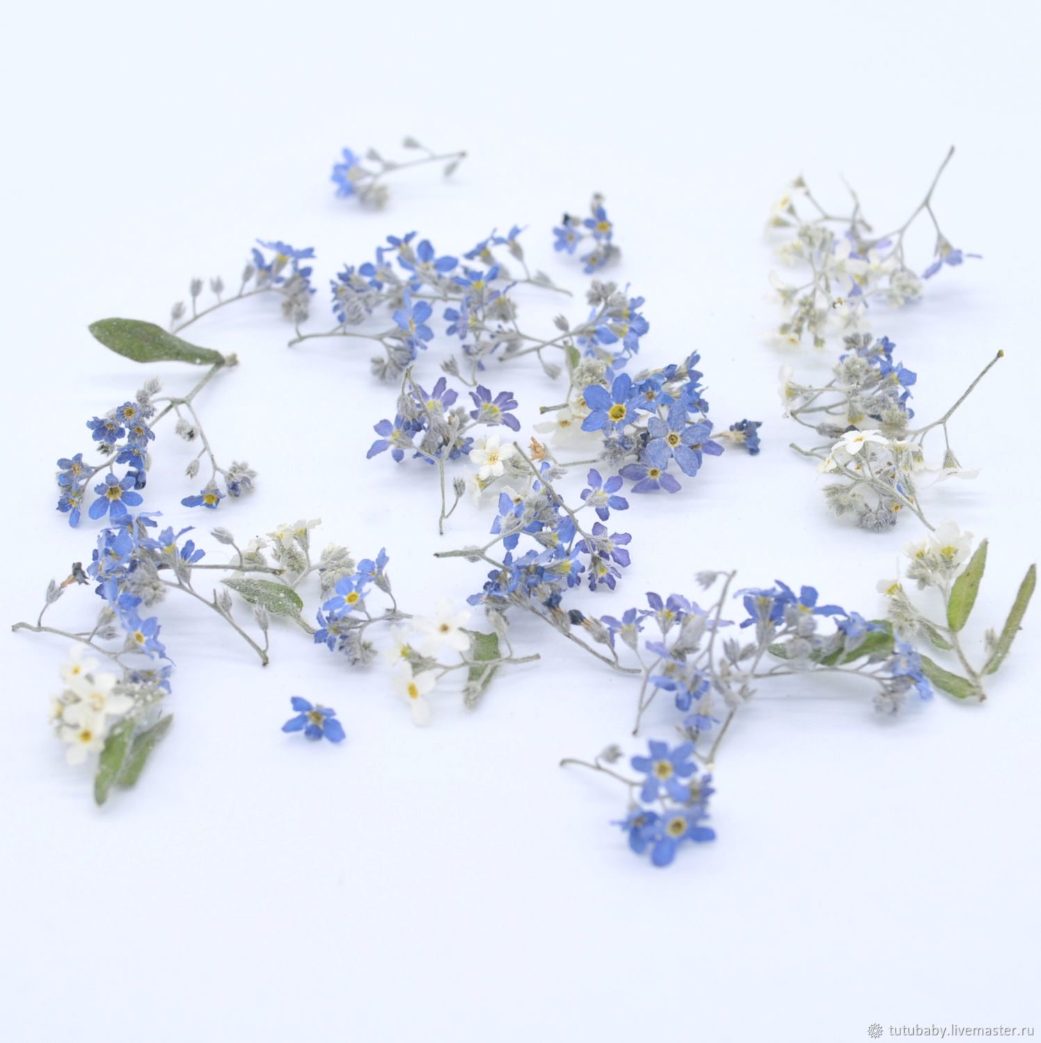 Forget-me-nots, volume drying, one set left, The dried flowers, Buzuluk,  Фото №1