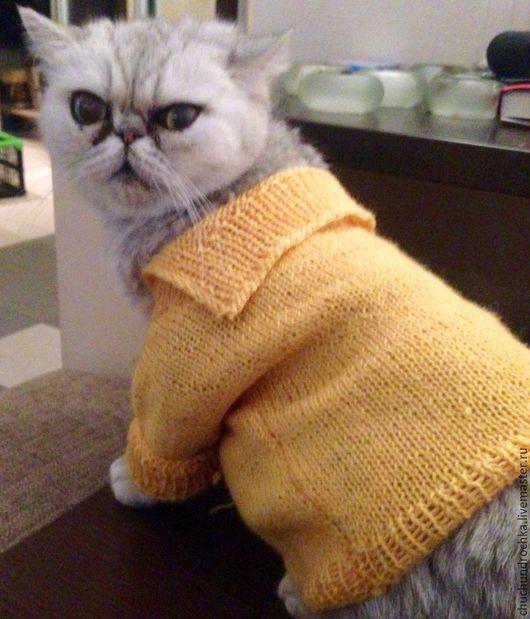 Одежда для кошек, ручной работы. Ярмарка Мастеров - ручная работа. Купить Распашонка Счастье. Handmade. Комбинированный, одежда для кошек, уют