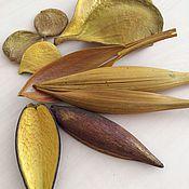 Сухоцветы тропических плодов жёлтые.