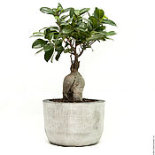 Цветы и флористика handmade. Livemaster - original item A pot of concrete for plants, flowers, loft-style. Handmade.