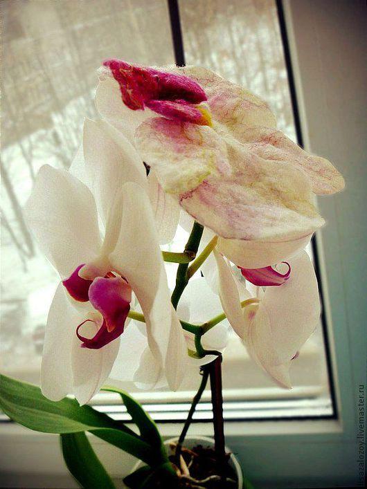 Валяный цветок орхидеи,белого цвета с ярко розовой тычинкой,выполнен на проволочном каркасе