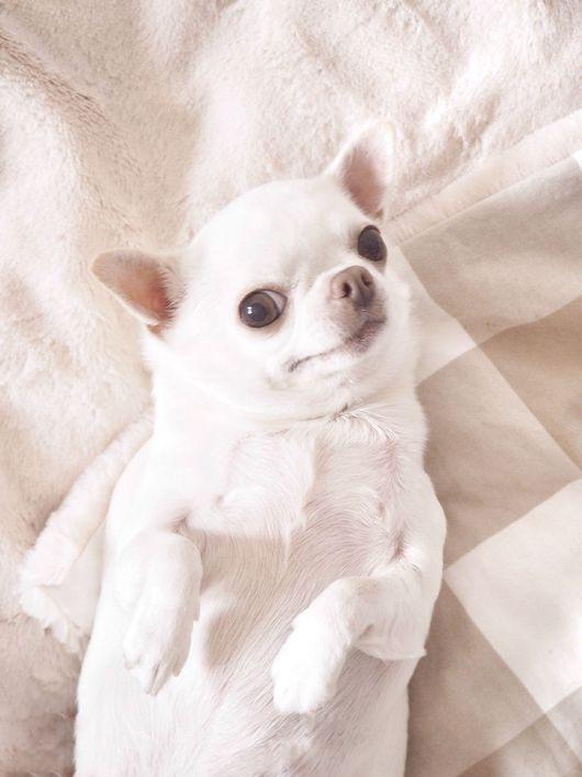 Аксессуары для собак, ручной работы. Ярмарка Мастеров - ручная работа. Купить Крим Дрим. Handmade. Для собак, плюшевое одеяло